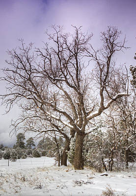 The Barren Tree  Poster