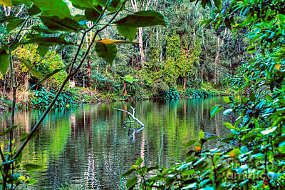 The Beautiful Greens Of Nature 2 Poster by Kaye Menner