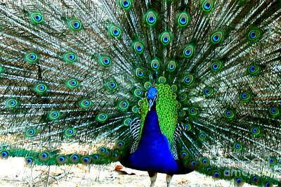 Poster featuring the photograph The Beautiful Plumage by Kathy  White