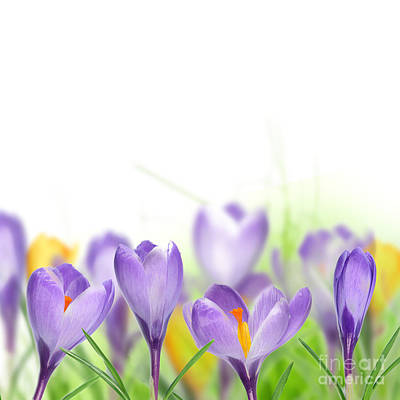 The Beautiful Spring Flowers Poster by Boon Mee