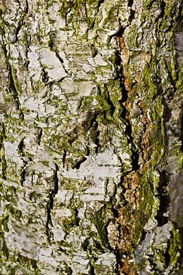 The Beech Tree Poster by David Pyatt