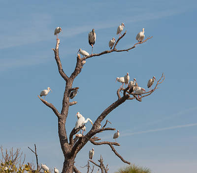 Poster featuring the photograph The Bird Tree by John M Bailey