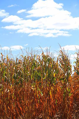 Poster featuring the photograph The Bloody Cornfield by Debra Kaye McKrill