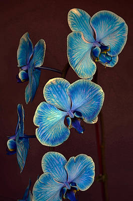 The Blue Orchid Poster