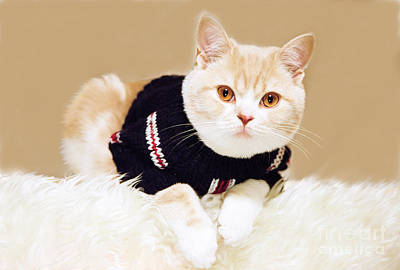 The Cat Wears Sweater Poster by Aiolos Greek Collections