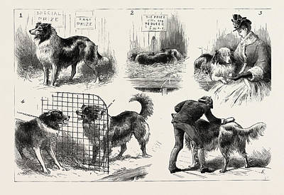 The Collie Dog Show At The Royal Aquarium, Westminster Poster