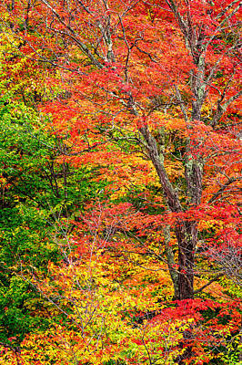 The Colors Of Autumn Poster by Jeff Sinon