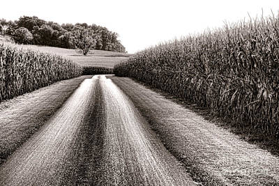 The Corn Road Poster by Olivier Le Queinec