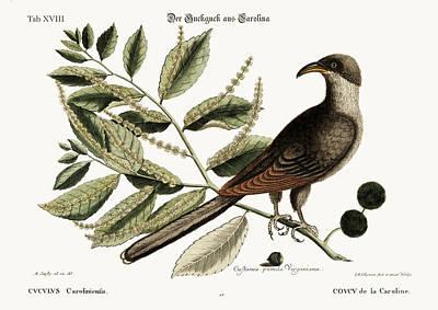The Cuckow Of Carolina Poster by Splendid Art Prints