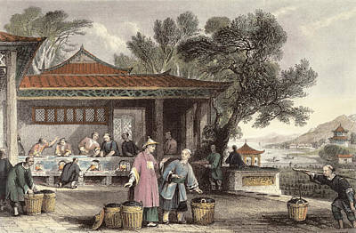 The Culture And Preparation Of Tea Poster by Thomas Allom