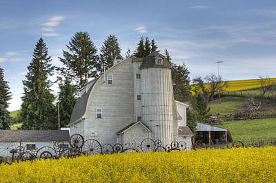 The Dahmen Barn And Canola Poster by Doug Davidson