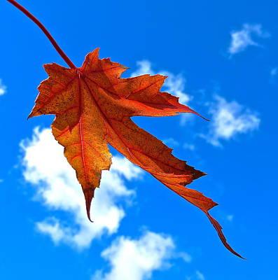 The Dance Of Autumn Poster by Rita Mueller