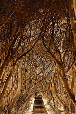 The Dark Hedges Poster by Pierre  TORNERO