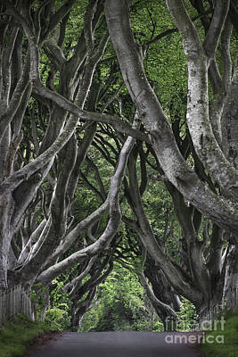 The Dark Hedges Poster by Svetlana Sewell