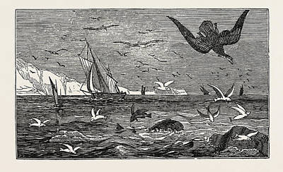 The Dolphin Or Dorado Pursuing The Flying Fish Poster