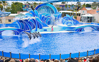 The Dolphin Show Blue Horizons At Seaworld. Poster by Jamie Pham