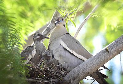 The Dove Family  Poster by Saija  Lehtonen