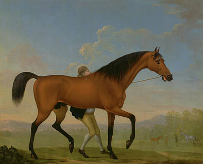 The Duke Of Ancasters Bay Stallion, Blank Poster by Litz Collection