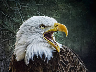 Poster featuring the photograph The Eagle's Cry by Brian Tarr