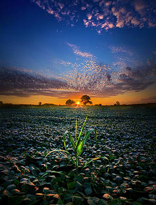 The Edge Of Dreams Poster by Phil Koch