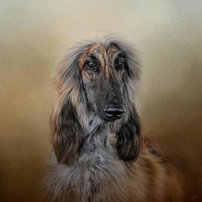 The Elegant Afghan Hound Poster