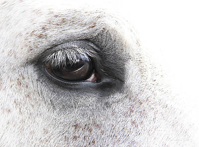 The Eye Of The Horse  Poster by Jennie Marie Schell