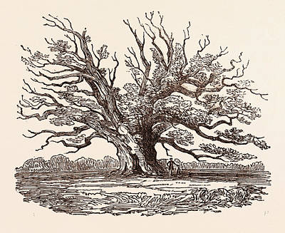 The Fairlop Oak, In Hainault Forest In The London Borough Poster by English School