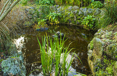 Poster featuring the photograph The Fish Pond  by Naomi Burgess