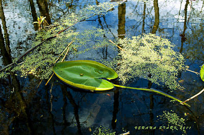 Poster featuring the photograph The Floating Leaf Of A Water Lily by Verana Stark