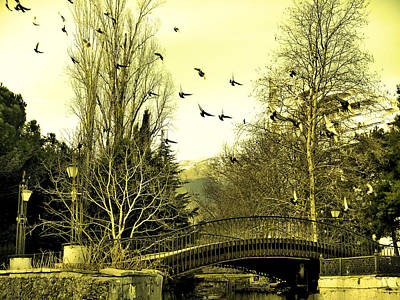 The Flock Near Bridge  Poster