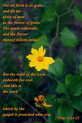 The Flower Thereof Falleth Away Poster
