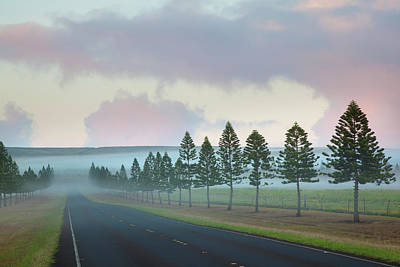 The Foggy Tree-lined Manele Road Poster by Jenna Szerlag