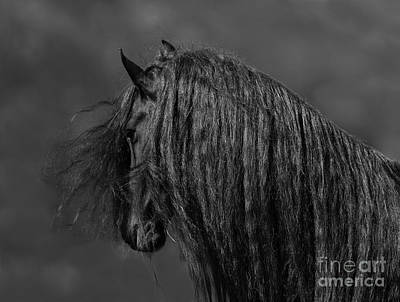 The Friesian's Long Mane Poster by Carol Walker
