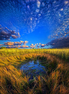The Frog Pond Poster by Phil Koch