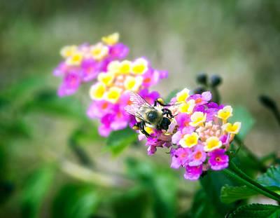 Honeybee Garden Poster by Mark Andrew Thomas