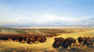 The Gathering Of The Herds Poster by William Jacob Hays
