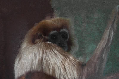 The Gibbon Poster