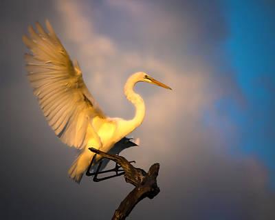 The Golden Egret Poster
