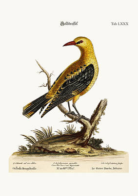 The Golden Thrush Poster by Splendid Art Prints
