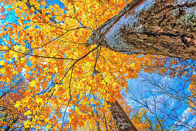 Poster featuring the photograph The Gorgeous Fall by Kimberleigh Ladd