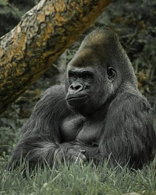 The Gorilla 3 Poster by Ernie Echols