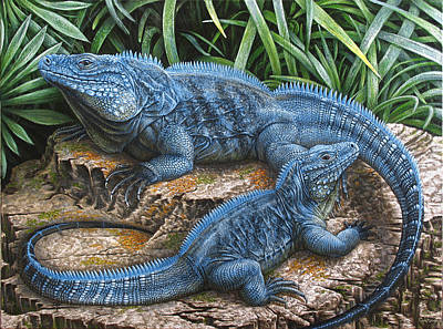 The Grand Cayman Blue Iguana Poster