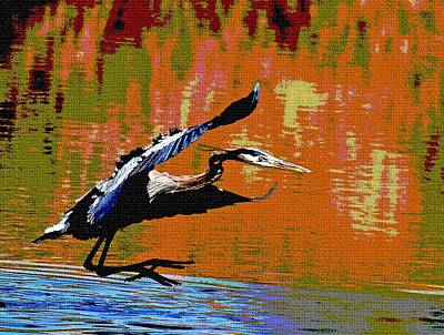 The Great Blue Heron Jumps To Flight Poster by Tom Janca