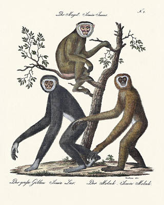 The Great Gibbon Poster by Splendid Art Prints