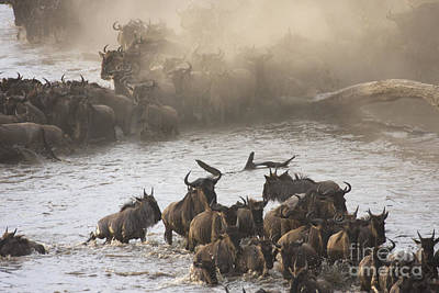 Poster featuring the photograph The Great Migration  by Chris Scroggins