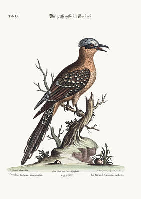 The Great Spotted Cuckow Poster by Splendid Art Prints