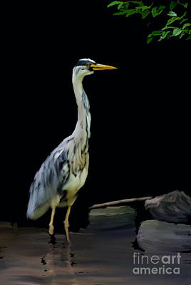 The Grey Heron Poster by Brian Roscorla