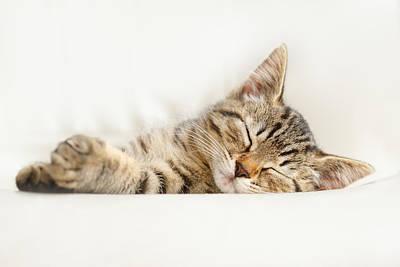 The Happy Kitten Poster by Roeselien Raimond
