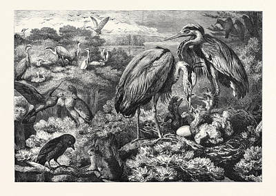 The Heronry At Didlington Park Norfolk 1868 Poster by English School