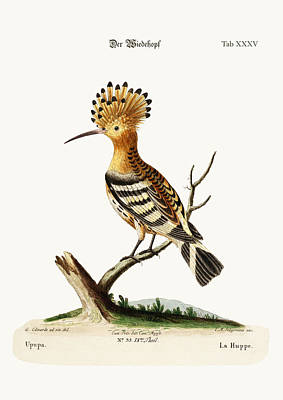The Hoopoe Poster by Splendid Art Prints